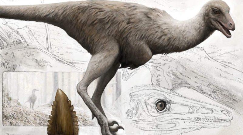 Троодон: Зимний динозавр