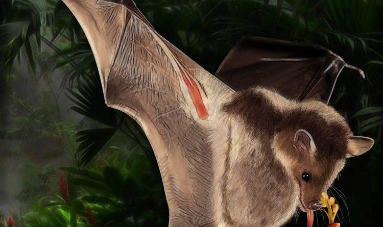 Листонос Лича: Летучая мышь с рогом