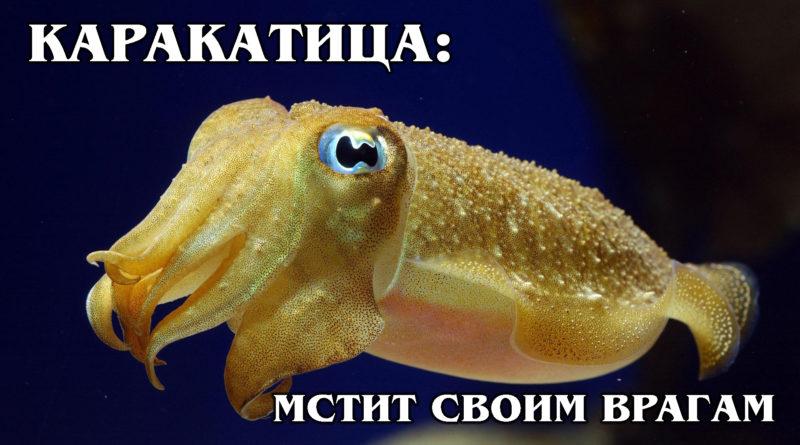 КАРАКАТИЦЫ: Умные моллюски-трансвеститы с чернилами | Интересные факты про морских обитателей