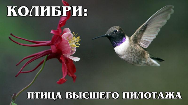 КОЛИБРИ: Самая маленькая в мире птица с самым большим сердцем | Интересные факты про птиц