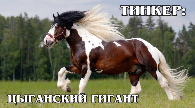 ЦЫГАНСКАЯ УПРЯЖНАЯ: Самая большая и дорогая рабочая лошадка | Интересные факты про породы лошадей