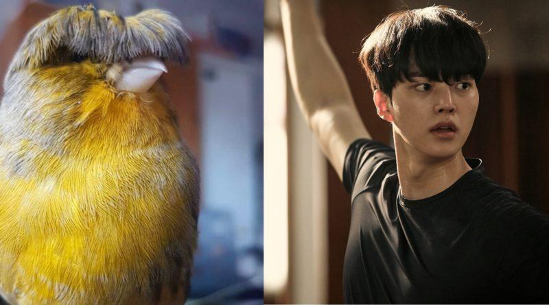 Канарейки глостер: Птицы с модной прической