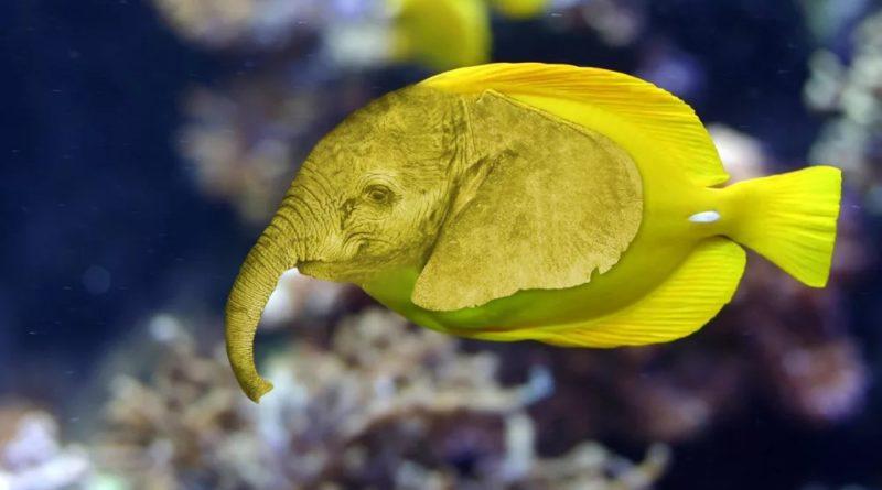 Рыба-слон: Зачем ей хобот?