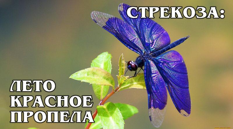 СТРЕКОЗА: Одно из самых древних насекомых на Земле | Интересные факты про насекомых