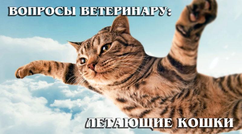 ВОПРОСЫ ВЕТЕРИНАРУ: Летающие кошки - Профилактика падений кошек и котов из окна или балкона