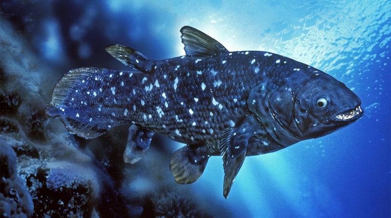 Кистепёрые рыбы: История эволюции