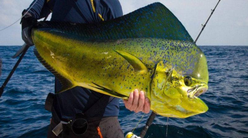 Корифена: Рыба-легенда