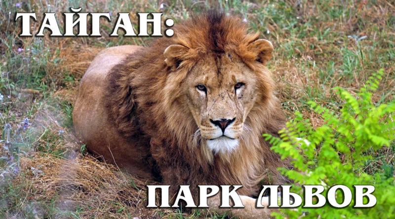 Парк львов «Тайган» (сафари-парк): Как разбогатеть с помощью зоопарков | Обзор Парка львов