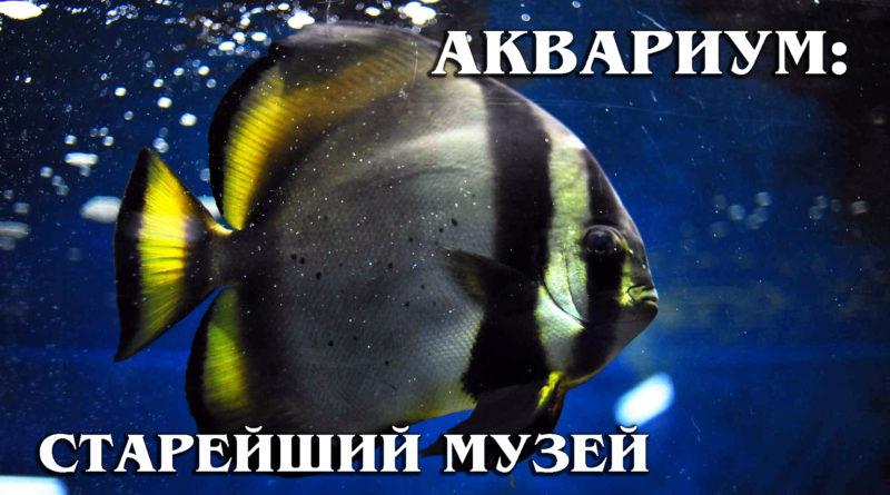 МУЗЕЙ-АКВАРИУМ: Севастопольский «Аквариум» - старейший в Европе | Обзор Музея и интересные факты про морских обитателей