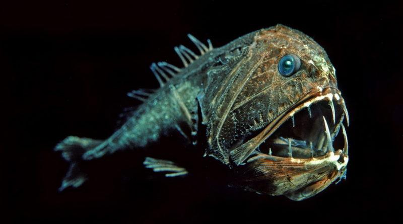 Длиннорогий саблезуб: Глубоководный монстр