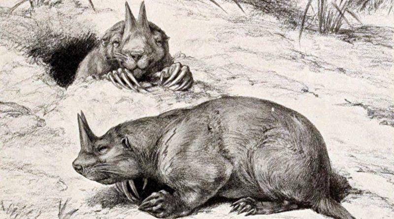 Цератогаулюс: Рогатый бобр доисторической Америки