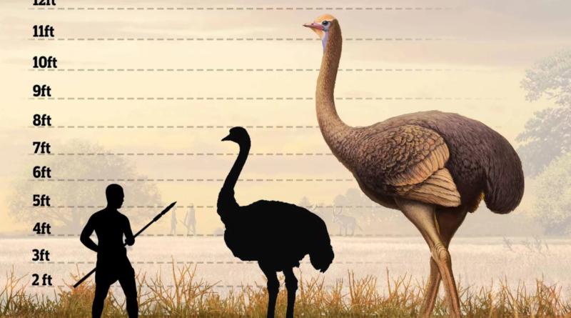 Пакиструтио дманисенс: Крымский доисторический страус