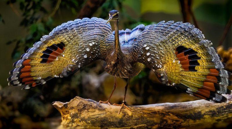 Солнечная цапля: Защищается крыльями