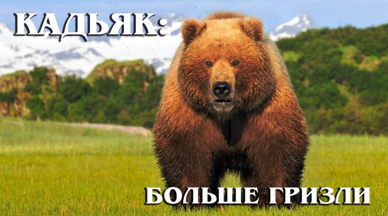 КАДЬЯК: Самый крупный подвид бурого медведя больше гризли | Интересные факты про медведей