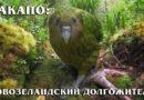 КАКАПО: Доисторический нелетающий попугай с запахом мёда и цветов | Интересные факты про попугаев и птиц