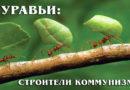 Муравьи: Иерархия общественного устройства в женском муравьином мире | Интересные факты про насекомых