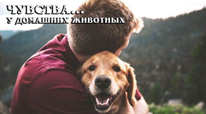 Шестое, седьмое и другие чувства у домашних животных | Интересные фаты про питомцев