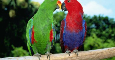 Благородные попугаи: Птицы с биполярным расстройством