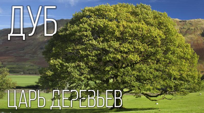ДУБ: Царь среди деревьев | Интересные факты про фауну планеты