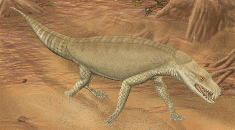 Армадиллозух: Крокодил в панцире броненосца